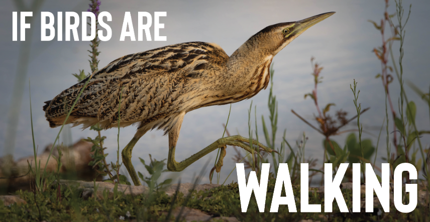 If Birds Are Walking
