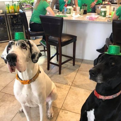 Minnie and Sterling St Pats